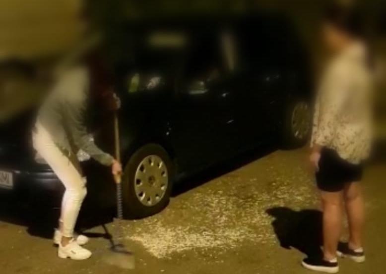 Amenzi pentru cei care aruncă cojile de semințe pe domeniul public
